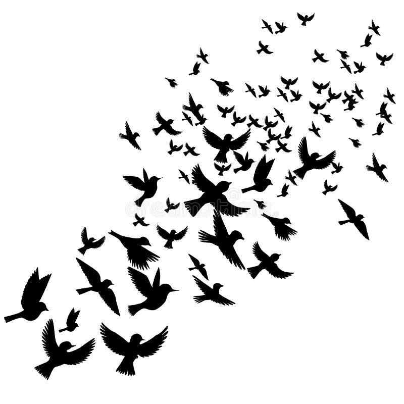 Силуэты летящих птиц вектора иллюстрация штока