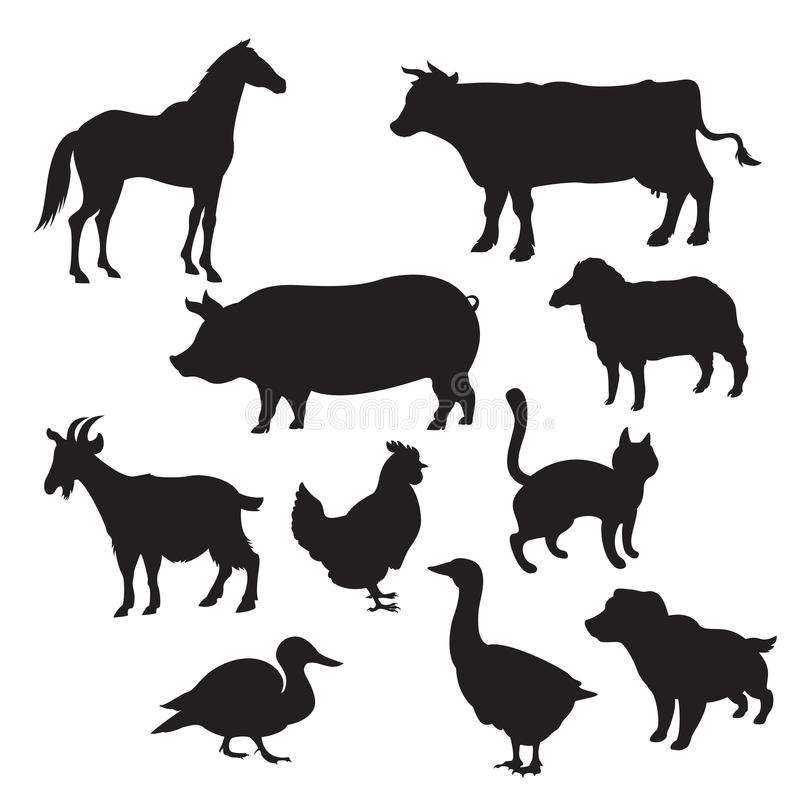 Тень домашних животных картинки