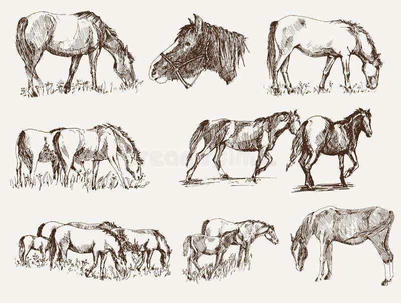 Силуэты лошадей бесплатная иллюстрация