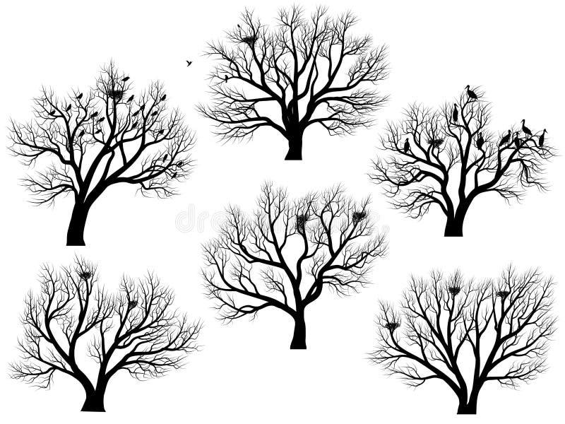 Силуэты птиц гнездятся в деревьях без листьев. иллюстрация штока