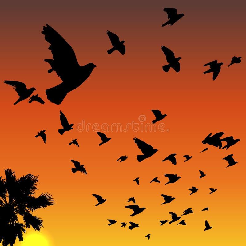 Силуэты птиц захода солнца иллюстрация вектора