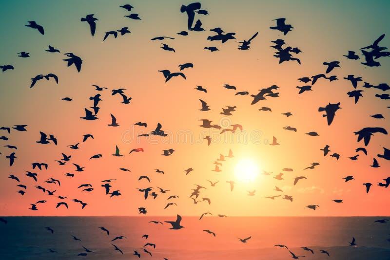 Силуэты птиц на заходе солнца в океане Животное иллюстрация штока