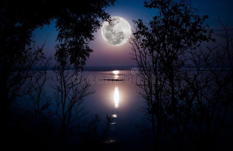 Силуэты древесин и красивого восхода луны, яркого полнолуния wo стоковое изображение rf