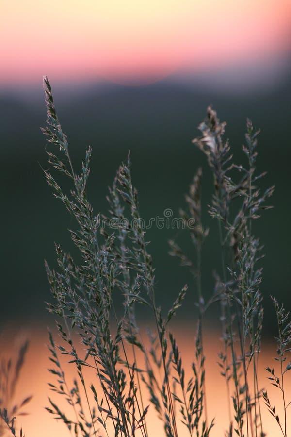 Силуэты спешкы на заходе солнца стоковые фотографии rf