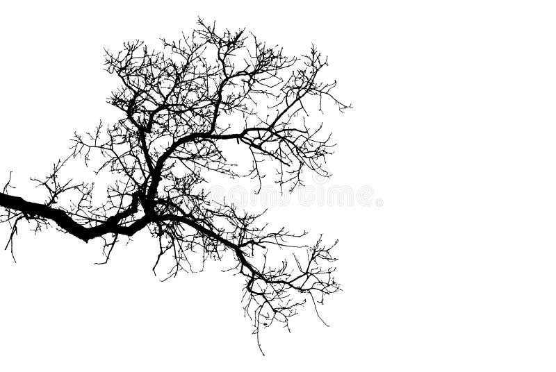 Силуэт ветвей дерева над белой предпосылкой стоковое изображение