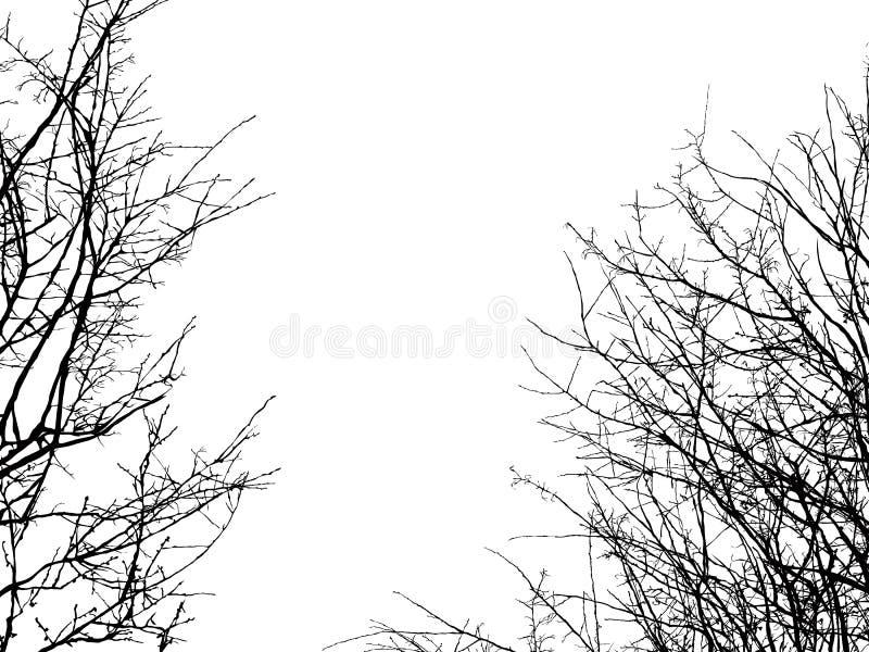 Силуэт ветви дерева иллюстрация штока
