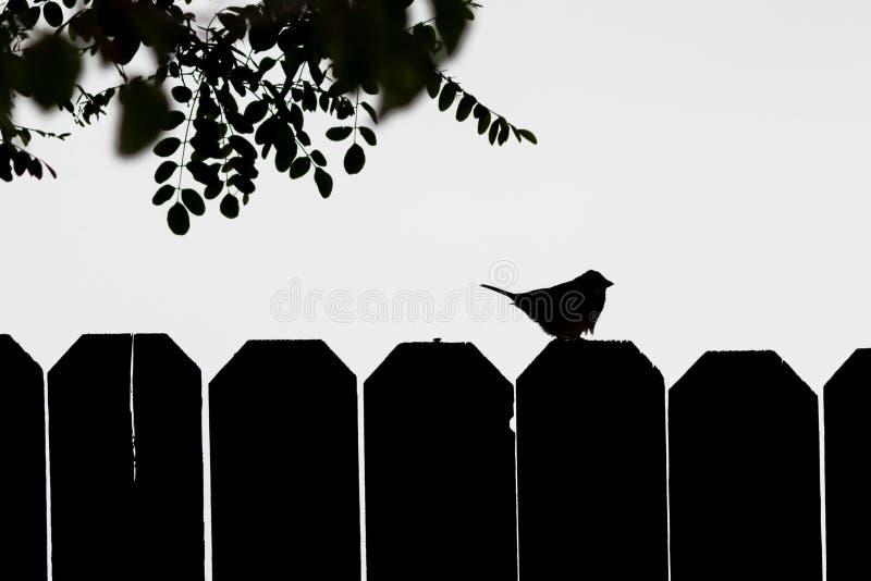 Силуэт воробья на загородке стоковая фотография rf