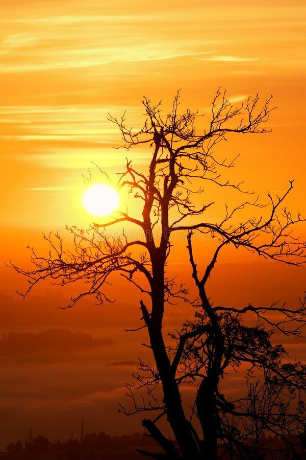 Силуэт дерева поднимать Солнця стоковые изображения rf