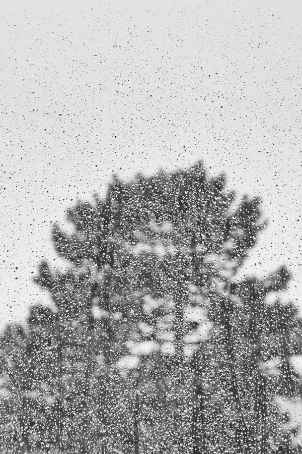 Силуэт дерева снял до конца через окно на дождливый день стоковая фотография rf