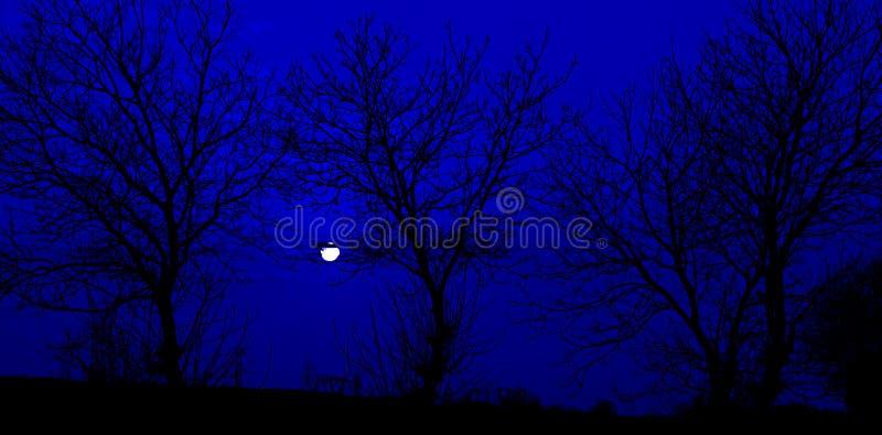 Силуэт, дерево, тайна, темная стоковое изображение