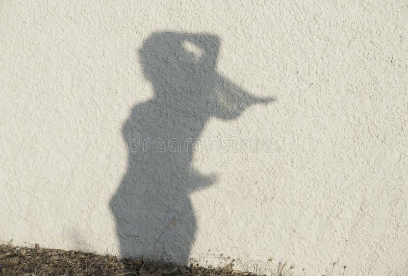 Силуэт диаграммы женщины на естественной предпосылке стены Женщины вычисляют на стене, художническом фото Контраст, силуэт диагра стоковые фотографии rf