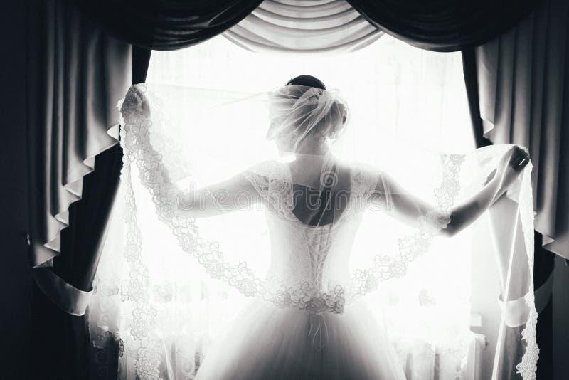 Силуэт невесты стоит на окне и держит вуаль черно-белый портрет невесты от задней части стоковое изображение