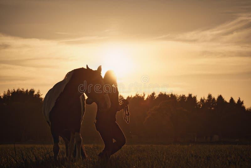 Силуэт лошади девушки идя стоковые фото