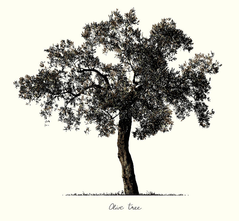 Силуэт оливкового дерева бесплатная иллюстрация