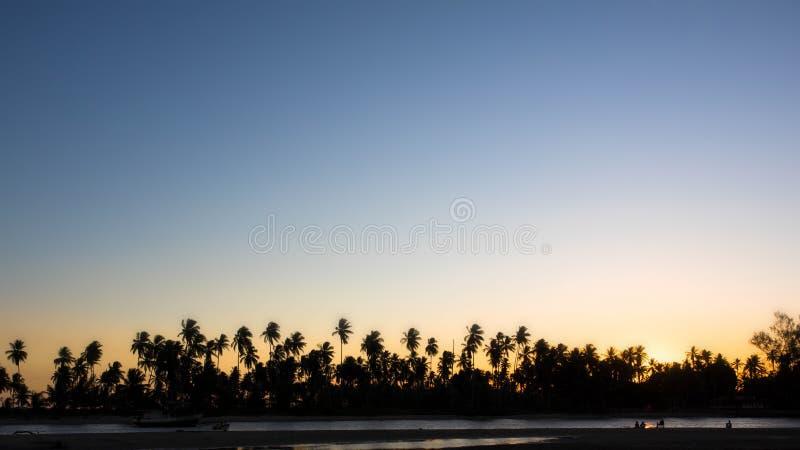 Силуэт пальм против ясного неба захода солнца стоковая фотография