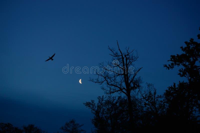 Силуэт птицы и деревьев с луной в задней части стоковое фото rf