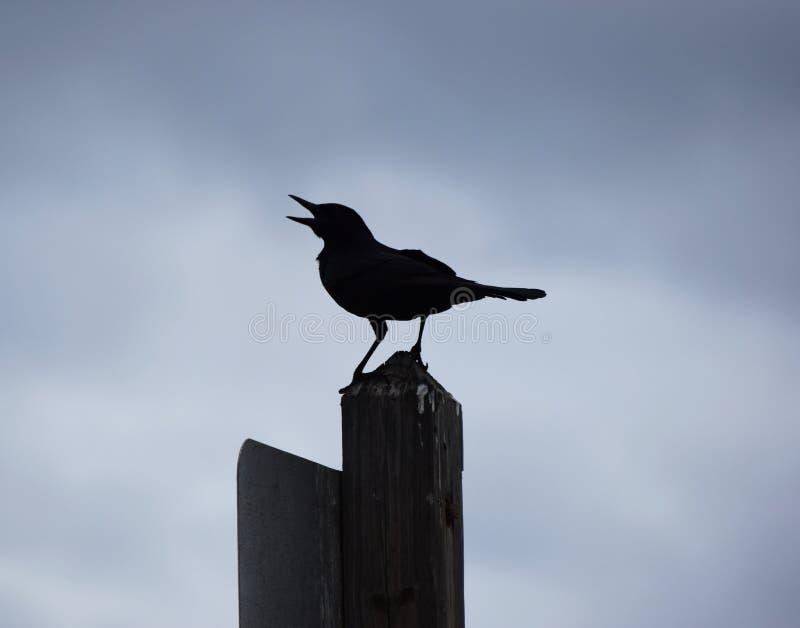 Силуэт птицы моря на столбе на пляже стоковые фото