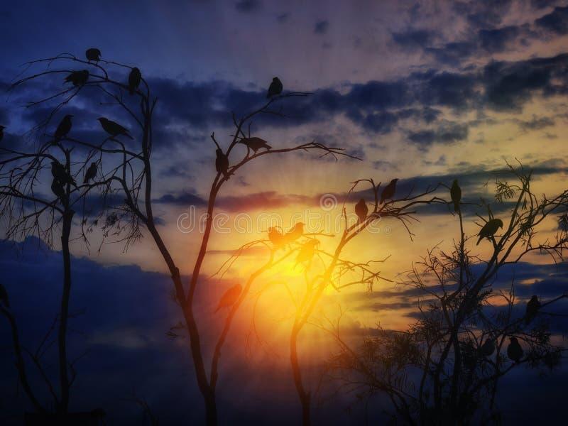 Силуэт птиц стоковые изображения