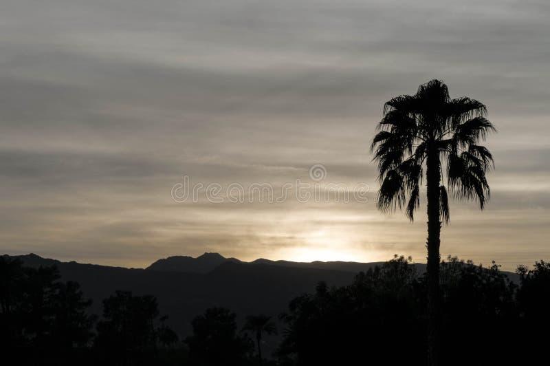 Силуэт-сумрак пальмы в Palm Springs Калифорнии стоковое изображение