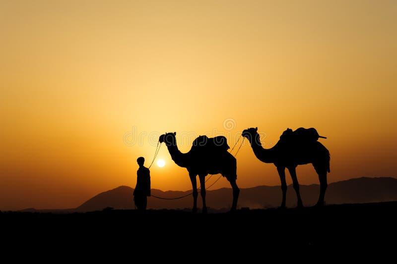 Силуэт торговца верблюда пересекая песчанную дюну во время солнца стоковое фото rf