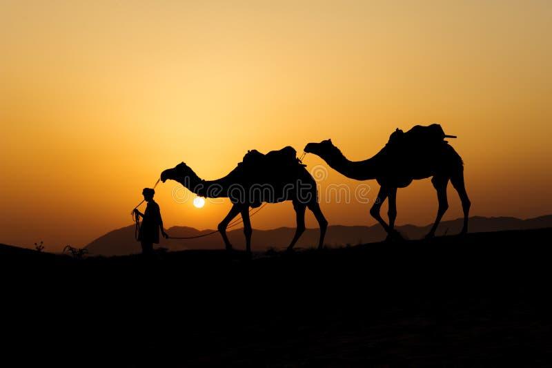 Силуэт торговца верблюда пересекая песчанную дюну стоковые фотографии rf
