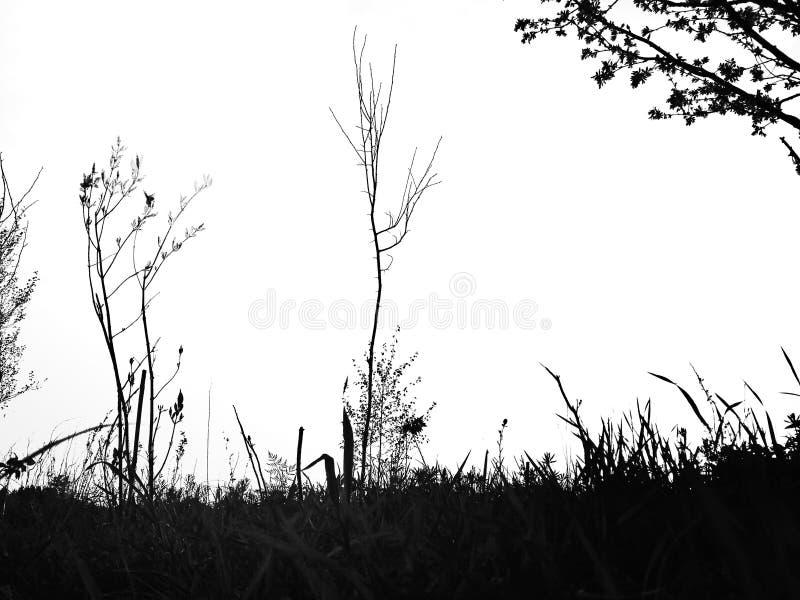 Силуэт травы и деревьев стоковые фотографии rf