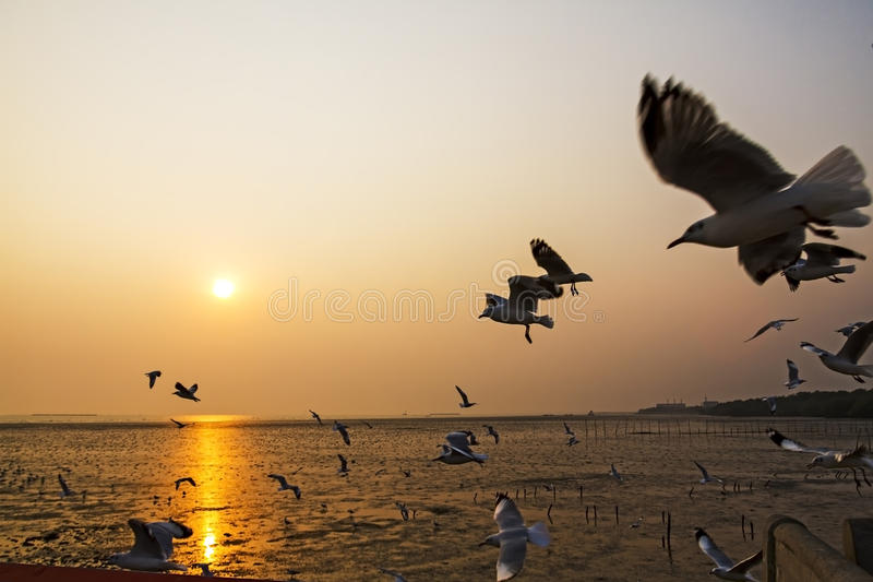 Силуэт чайки группы стоковые изображения