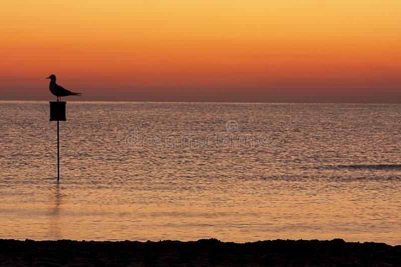 Силуэт чайки моря восхода солнца стоковое изображение
