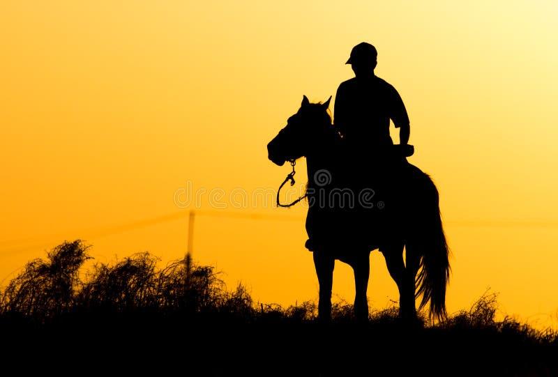 Силуэт человека на лошади на заходе солнца стоковое изображение rf