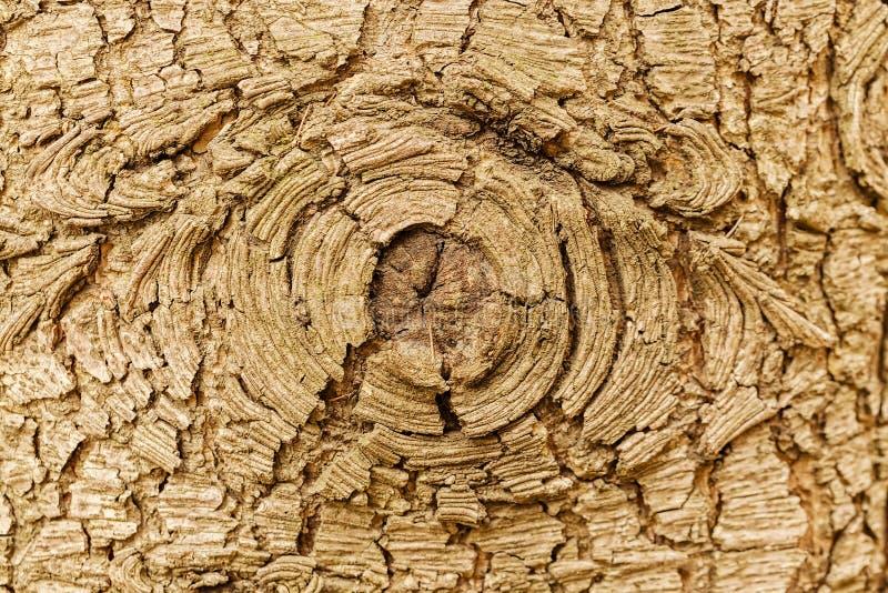 Сильно детальная текстура коры дерева стоковые фото
