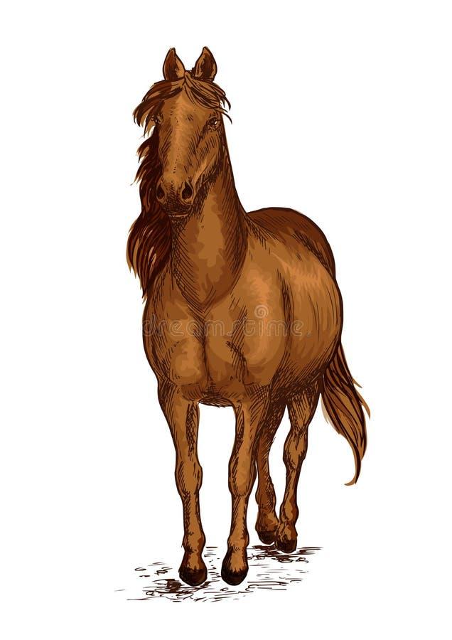 Сильный коричневый аравийский портрет мустанга лошади иллюстрация штока