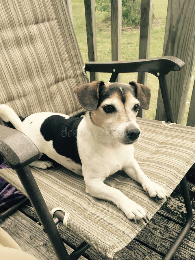Сидя человеческая собака стоковая фотография rf