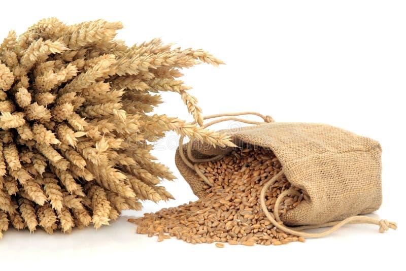 Сказанная по буквам пшеница стоковые фото