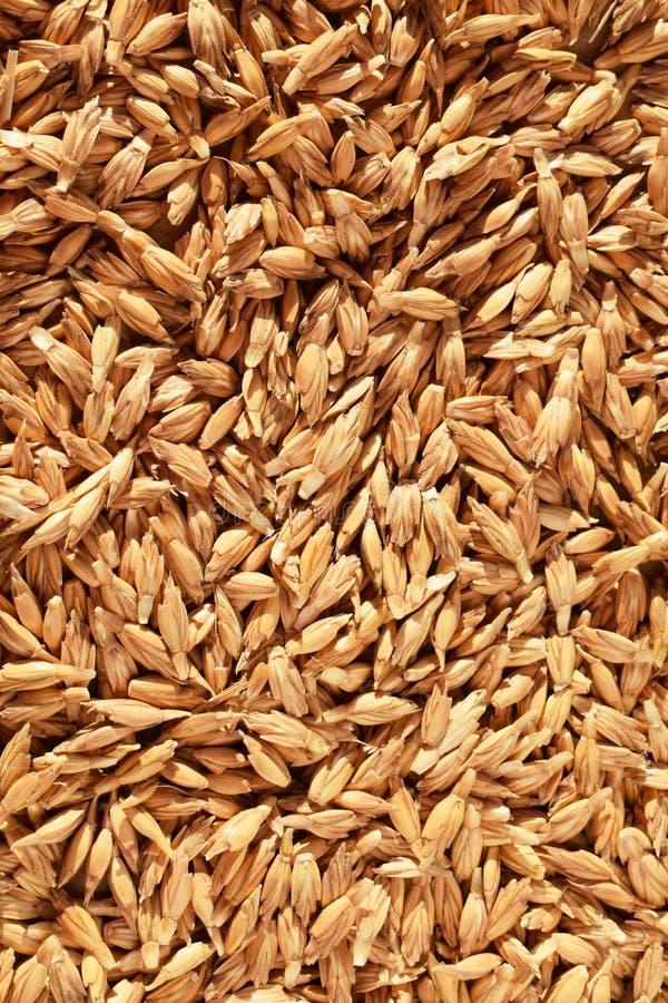 сказанные по буквам зерна стоковое изображение rf