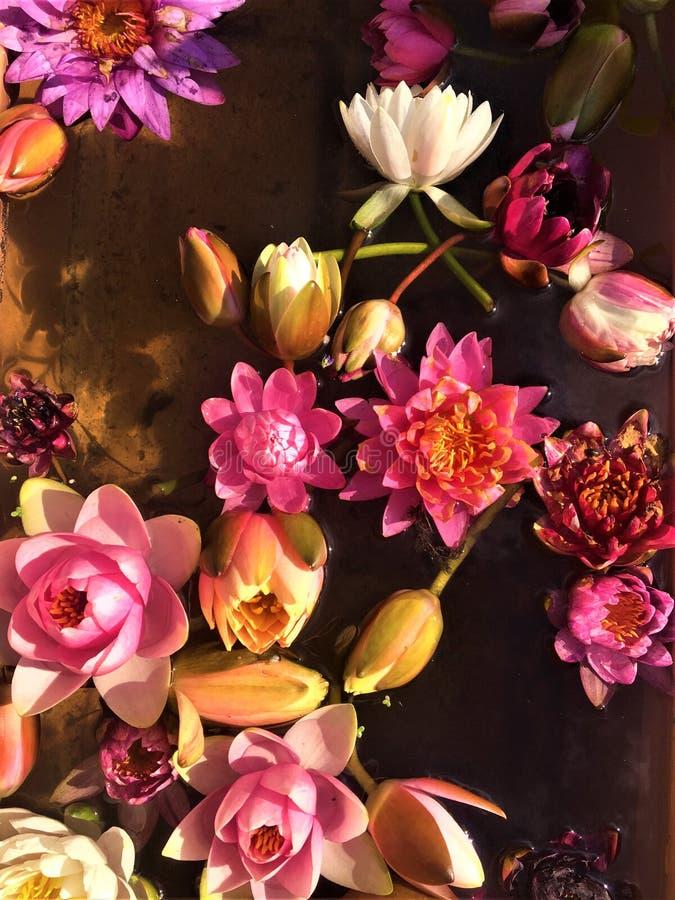 Сказка, волшебство, весна, благоухание, цвета, картина и душа цветка стоковые фотографии rf