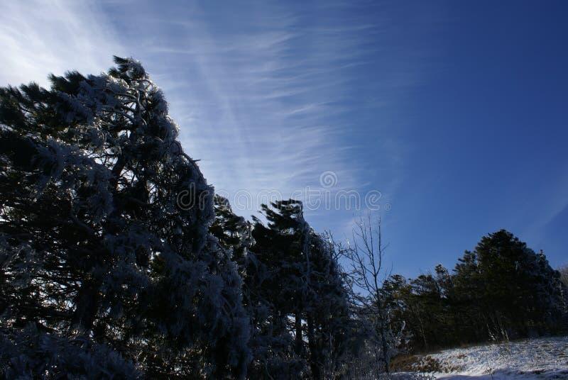 Сказ зимы горы в Gelendzhik стоковые фотографии rf