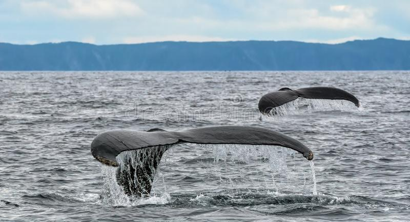 Сказ кабелей кита стоковая фотография rf