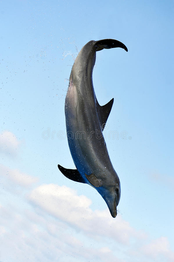 скакать дельфина стоковое фото rf