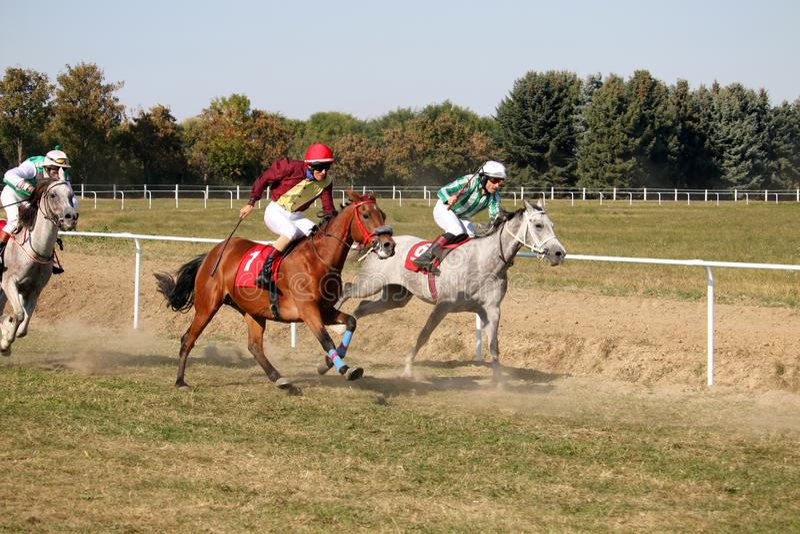 Скакать лошади и жокеи гонки стоковые изображения rf