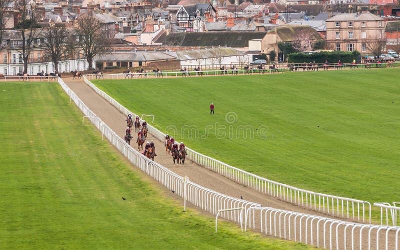 Скаковые лошади на городке Newmarket галопов стоковые фото