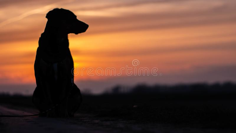 Скалистая собака и заход солнца стоковые изображения rf
