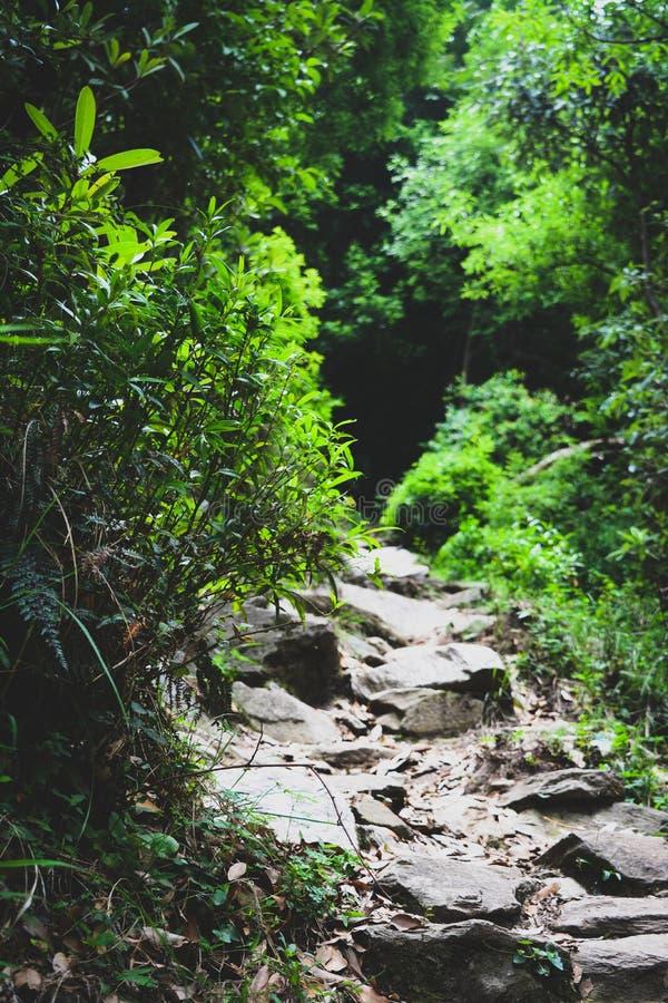 Скалистые пути стоковое фото