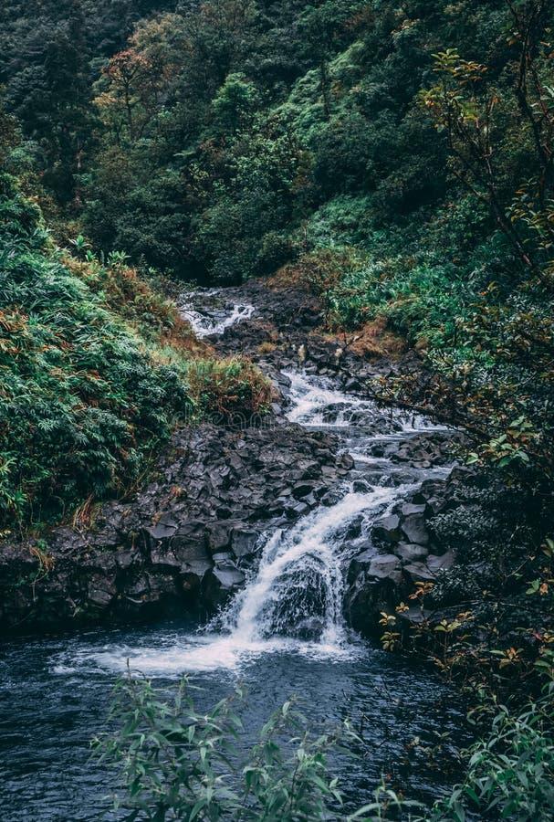 Скалистый водопад джунглей стоковое фото rf
