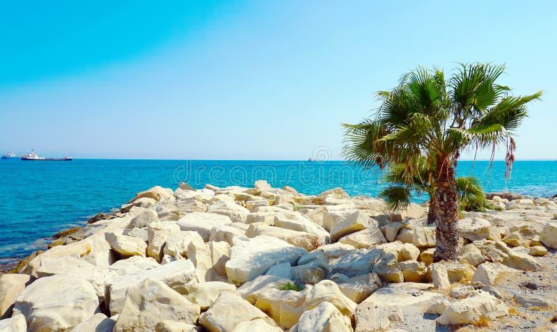 Скалистый пляж моря с сиротливой пальмой стоковое изображение rf