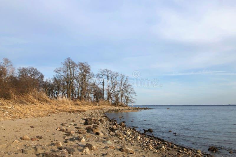 Скалистый пляж с деревьями в Rye, Нью-Йорке стоковое фото