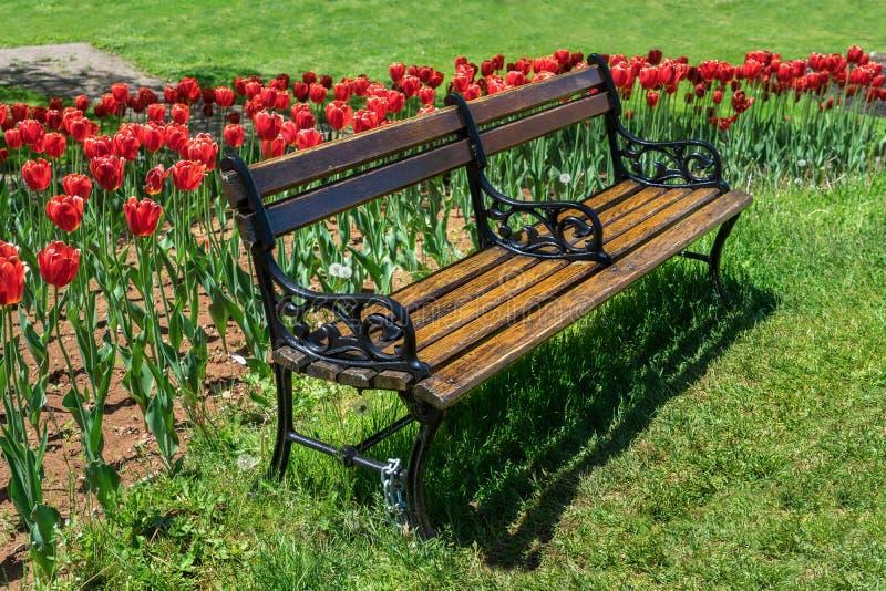 Скамейка в парке в саде весны стоковые фотографии rf