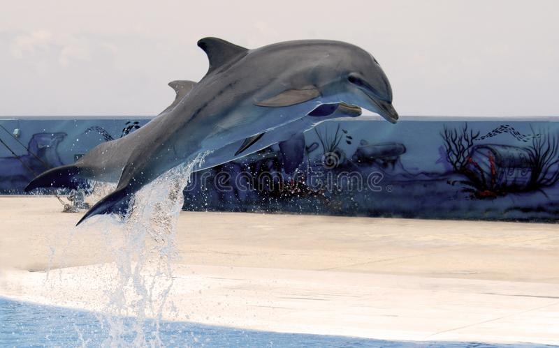 2 скача дельфина стоковое изображение rf