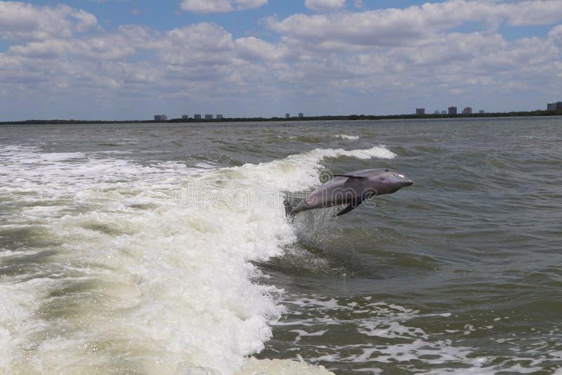 Скача дельфин стоковая фотография