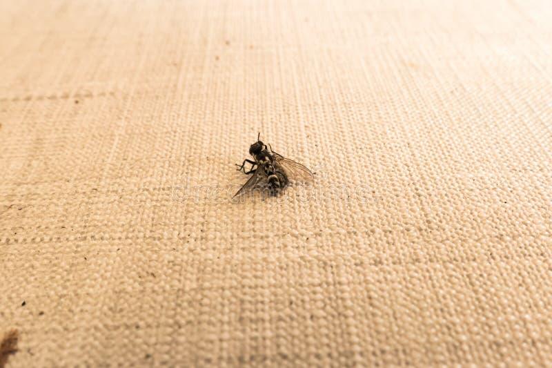 Скача муха убийства паука стоковые фото