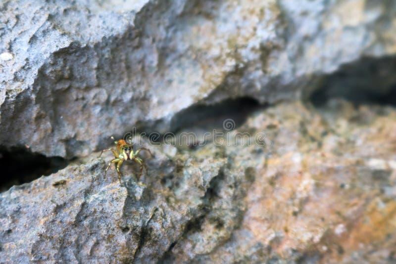Скача пауки в саде стоковое изображение rf